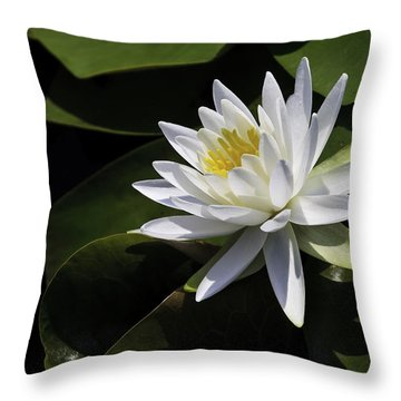 Nymphaea Marliacea 'albida' Throw Pillow by Perla Copernik