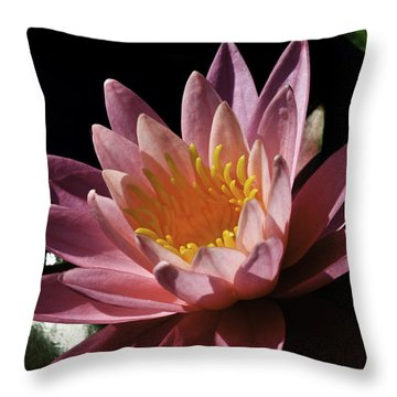 Nymphaea 'sunny Pink' Throw Pillow by Perla Copernik