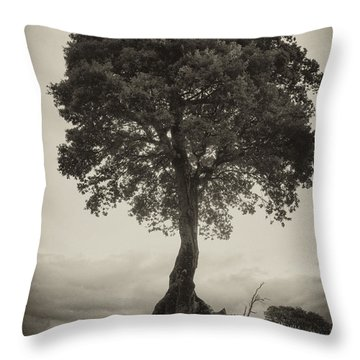 Throw Pillow featuring the photograph Oak Tree by Hugh Smith