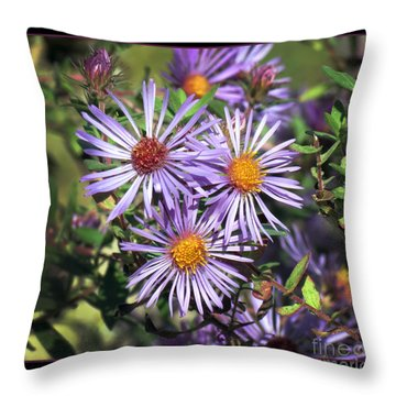 Odd Aster Out Throw Pillow by Darleen Stry