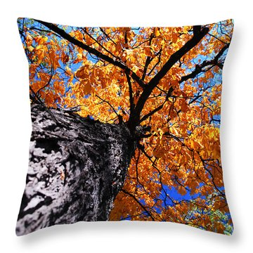 Old Elm Tree In The Fall Throw Pillow by Elena Elisseeva