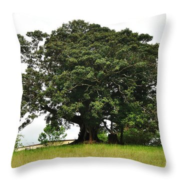 Old Fig Tree - Ficus Carica Throw Pillow by Kaye Menner