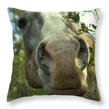 Throw Pillow featuring the photograph Old Gray Mare by Patricia Greer