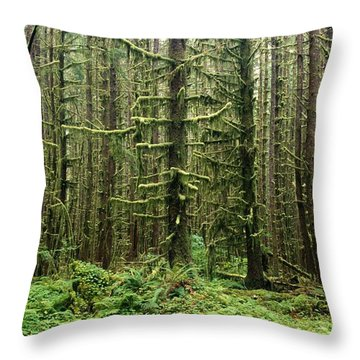 Old Growth Forest In The Hoh Rain Throw Pillow by Natural Selection Craig Tuttle