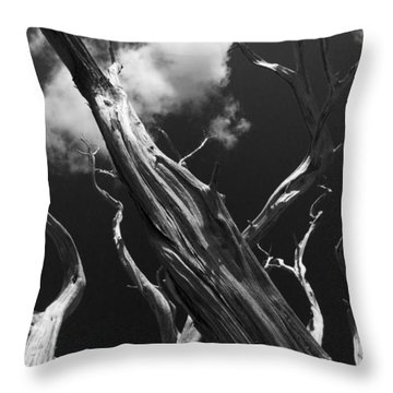 Throw Pillow featuring the photograph Old Tree by David Gleeson