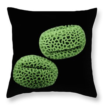 Olive Olea Europaea Sem Close-up View Throw Pillow by Albert Lleal