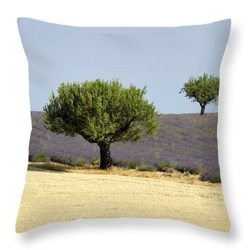 Olives Tree In Provence Throw Pillow by Bernard Jaubert