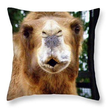 Omar The Camel Throw Pillow by Lainie Wrightson