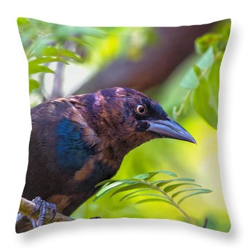 Ominous Molting Grackle Throw Pillow by Bill Tiepelman