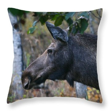 Throw Pillow featuring the photograph On Alert by Doug Lloyd