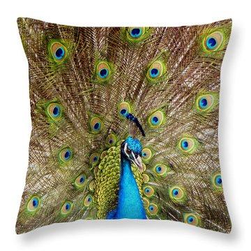 On Display Throw Pillow by Sandi OReilly