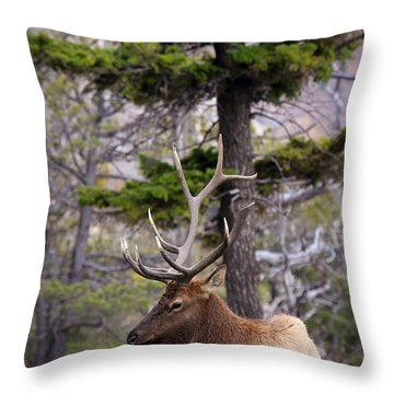 On The Grass Throw Pillow by Steve McKinzie