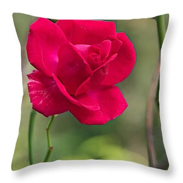 Throw Pillow featuring the photograph One Rose by Joseph Yarbrough