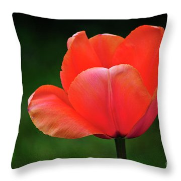 Opened Red Throw Pillow by Diego Re