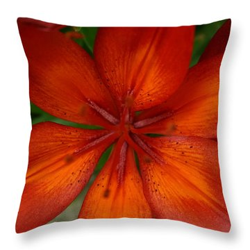 Orange Beauty Throw Pillow by Dolores  Deal