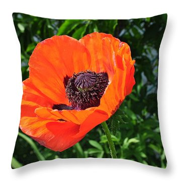 Orange Burst Throw Pillow by Luke Moore