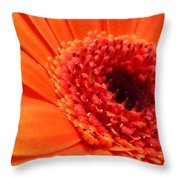 Orange Gerbera Close Up Throw Pillow by Ken Brannen