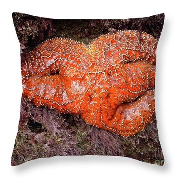 Orange Sea Star Throw Pillow by Mariola Bitner