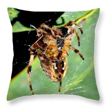 Orb Weaver Waits Throw Pillow