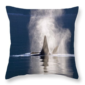 Orca Pair Spouting Southeast Alaska Throw Pillow by Flip Nicklin
