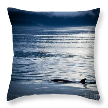 Orca Surfacing Throw Pillow by Darcy Michaelchuk