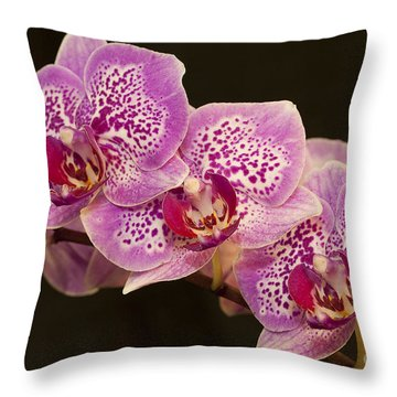Orchids Throw Pillow by Eunice Gibb