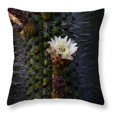 Organ Pipe Cactus  Throw Pillow by Saija  Lehtonen