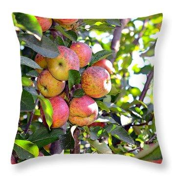 Organic Apples In A Tree Throw Pillow by Susan Leggett