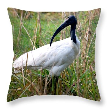 Throw Pillow featuring the photograph Oriental White Ibis by Pravine Chester