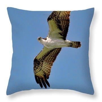 Osprey Above Throw Pillow