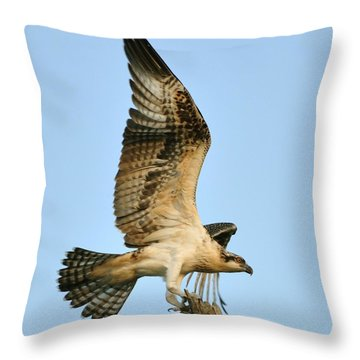 Throw Pillow featuring the photograph Osprey After Flight by Rick Frost