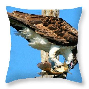 Osprey Eating A Fish Throw Pillow
