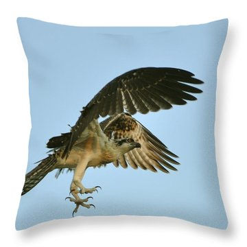Throw Pillow featuring the photograph Osprey In Flight by Rick Frost