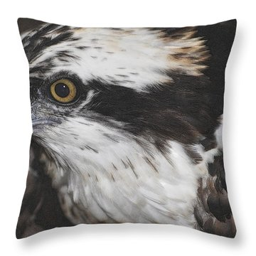Throw Pillow featuring the photograph Osprey by Lydia Holly