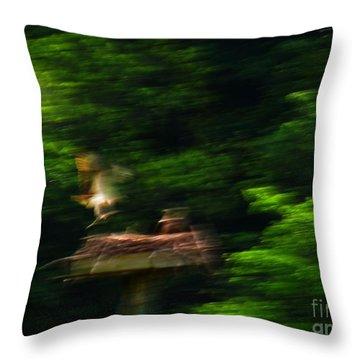 Osprey Motion Throw Pillow by Rrrose Pix