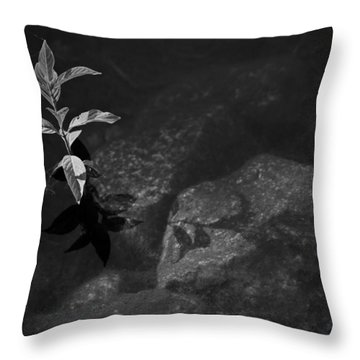 Out Of The Water Comes Shadows Bw Throw Pillow by Karol Livote