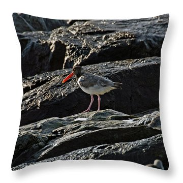 Oyster On The Rocks Throw Pillow