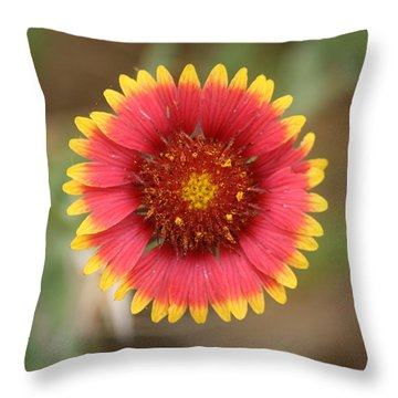 Throw Pillow featuring the photograph Painted Blanket Flower by Donna  Smith