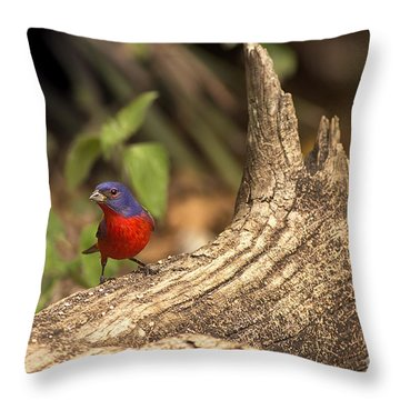 Throw Pillow featuring the photograph Painted Bunting On Log by Anne Rodkin