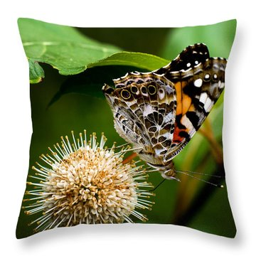 Painted Lady On Button Bush Throw Pillow by Travis Burgess