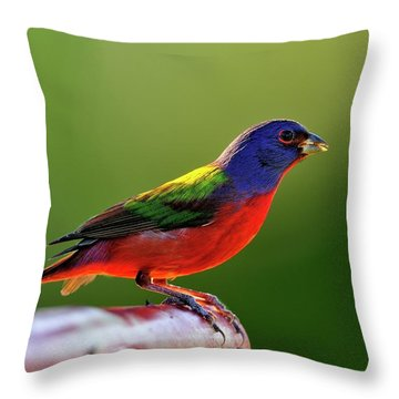 Painting Color Throw Pillow