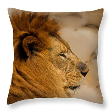 Papa Can You Hear Me Throw Pillow by Robin Konarz