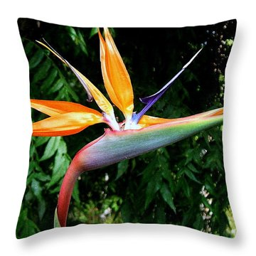 Throw Pillow featuring the photograph Paradise by Kathy Bassett