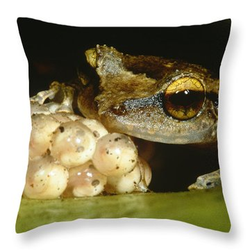 Parental Care By Tree Frog Throw Pillow by Dante Fenolio
