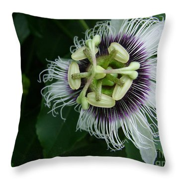 Passion Fruit Flower Throw Pillow by Mary Deal