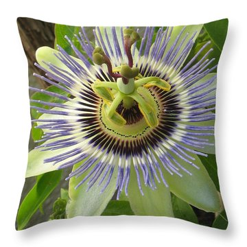 Throw Pillow featuring the photograph Passionate by Tina Marie