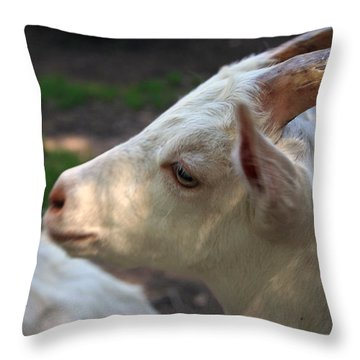 Throw Pillow featuring the photograph Patience Is A Virtue by Kay Novy
