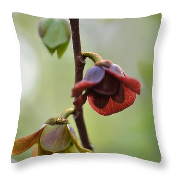 Throw Pillow featuring the photograph Paw-paw Flowers by JD Grimes