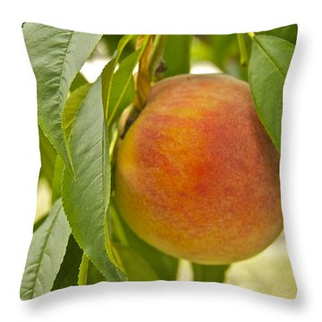 Peachy 2903 Throw Pillow by Michael Peychich