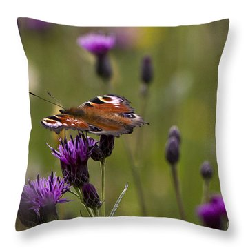 Peacock Butterfly On Knapweed Throw Pillow by Clare Bambers